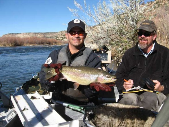State Department of Game and Fish Biologist, James Dominguez, 36, of Tucumcari, displays one of many fine trout found in the waters of New Mexico's San Juan River during an electro-shocking expedition in the late fall of 2008. To the right, San Juan River Fisheries Biologist, Marc Wethington,44, of Kirtland, takes note.