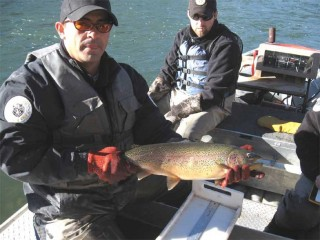 James Dominguez, Fisheries Biologist with the State Department of Game and Fish shows off one of the San Juan River's prized trophy trout during an electro-shocking expedition in November, 2008.