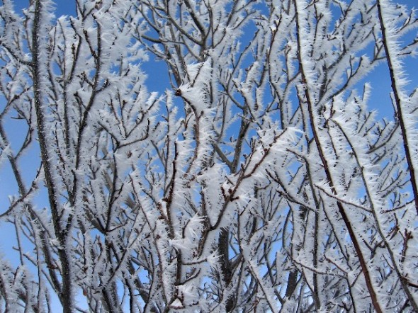 wind blown snow crystals on trees