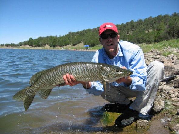 Matt Pelletier of New Mexico Muskie's Inc shows off a typical  catch at Quemado Lake, Fall 2010.