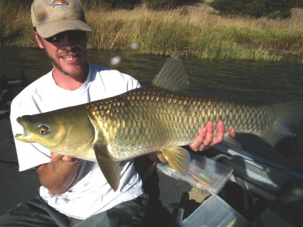 man shows off grass carp