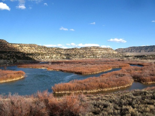 View overlooking Baetis Bend on the San Juan River during the fall months.