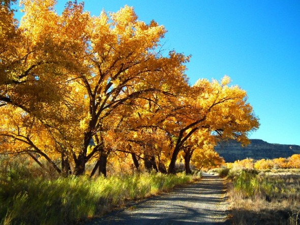 A San Juan Country Road basks in the sunshine of a gorgeous autumn day on the San Juan River in northwestern New Mexico.