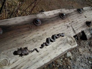 Nail art embedded in a timber at Soda Dam near Jemez Springs, New Mexico.