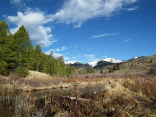 Beaver ponds on Brewery Creek provide a home for native trout.