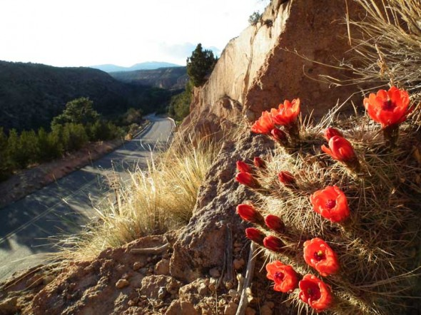 The road to Bandelier.