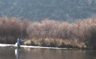 A lone angler fishes a quiet back channel of the San Juan River.