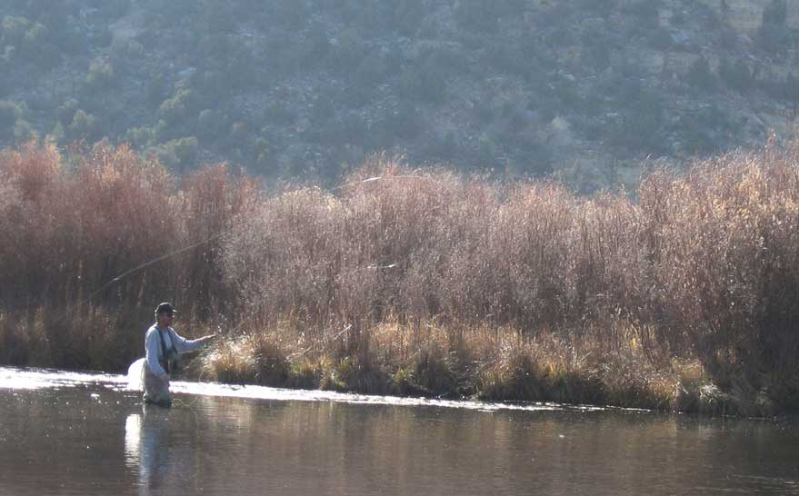 The lure of fly fishing new mexico 39 s san juan river for Fly fishing new mexico