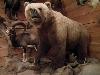 Grizzly Mount