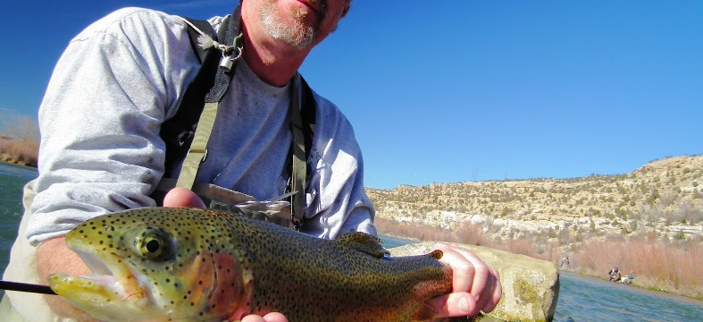Mark Wethington, Fisheries Biologist for the New Mexico Department of Game and Fish (NMDGF) shows off a nice Rainbow trout caught in revitalized Braids section of the San Juan River.