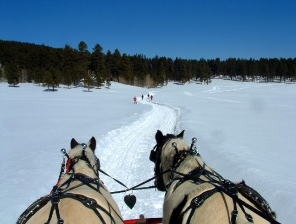 The view from a horse drawn sleigh on a trail ride at the Valles Caldera National Preserve.