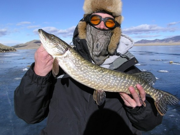 Matt Pelletier holds up a Pike caught while ice fishing.