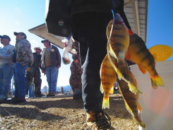 Tasty Perch are plentiful in Eagle Nest Lake and make for good eating and the bag limit is 30 per day.