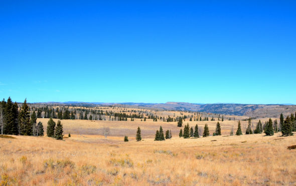 Scenic view off Forest Road 87 in Carson National Forest