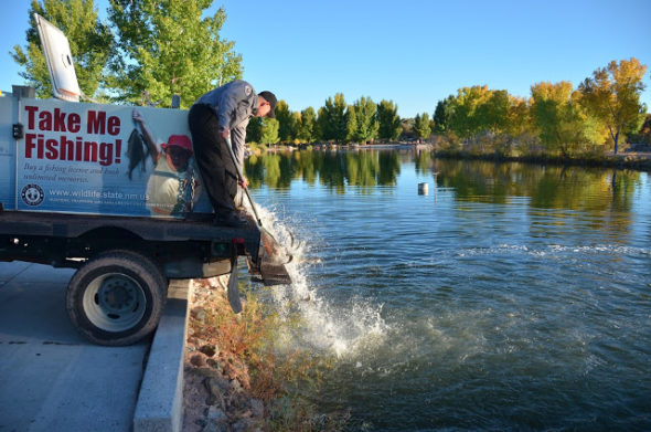 N.M. Dept. of Game and Fish employee stocking trout at Tingley Beach