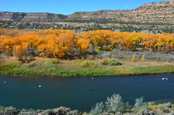 San Juan River below Simon Canyon