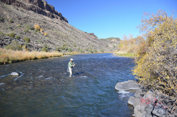 Angler fly-fishing on the Rio Grande in N.M.